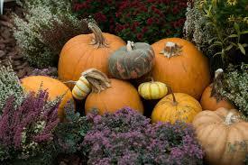 Fall Freshness